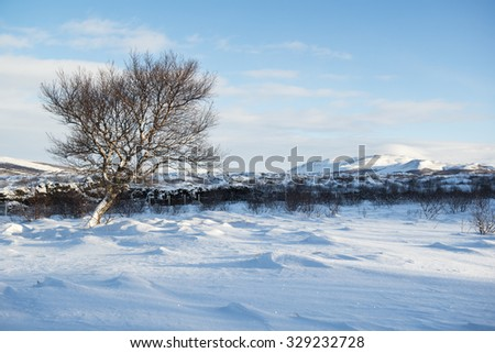 Landscape with a tree, snow dunes and a lonely winter tree, Iceland - stock photo