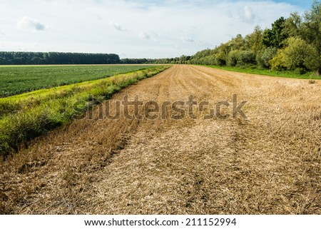 Landscape with a yellow and brown colored stubble field after harvesting the wheat next to growing potato plants. - stock photo