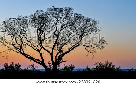 Landscape with an african tree at sunset, Zambia, Africa - stock photo