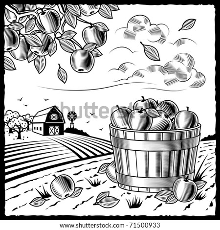Landscape with apple harvest black and white - stock photo