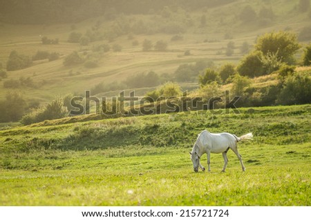 landscape with beautiful white horse grazing at the sunset - stock photo