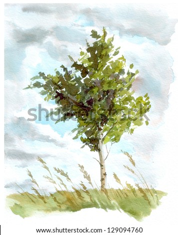 Landscape with birch tree in grass - stock photo