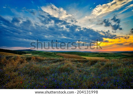 landscape with blooming fields in summer, Dobrogea, Romania - stock photo