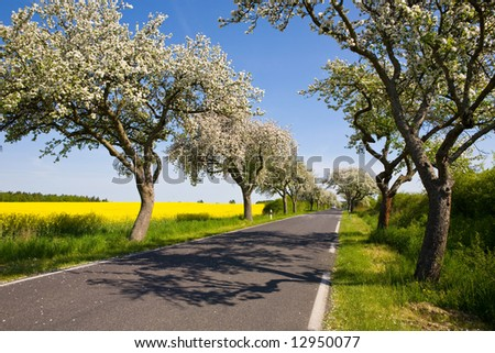 Landscape with blossom apple tree,  rapeseed flower field, road and blue sky - stock photo