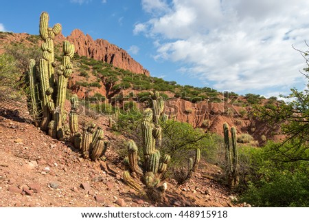 Landscape with cactuses, mountains and bushes, Devil's rocks, Bolivia, South America