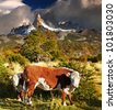 Landscape with cows and Mount Fitz Roy, Patagonia, Argentina - stock photo