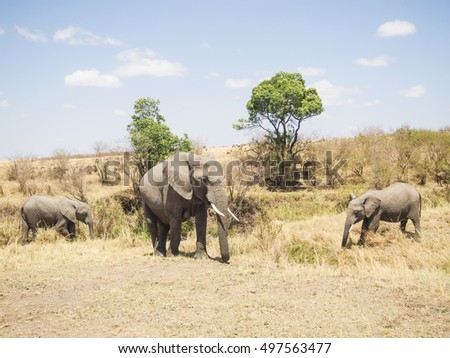 landscape with elephants in the Masai Mara National Park in Kenya africa