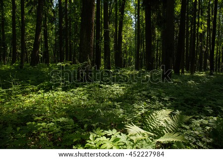 Landscape with ferns and a trail in the woods on a Sunny day. The Village Of Arkhangelsk. Russia.