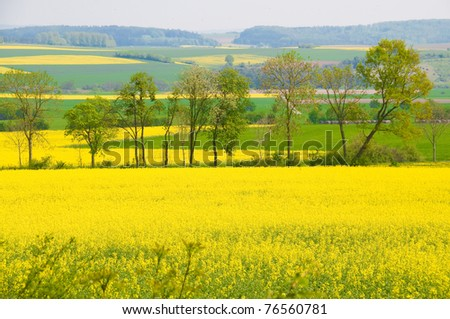 Landscape with flowering trees and rapeseed.