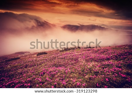 Landscape with flowers in mountain and majestic sky on morning, vintage picture - stock photo