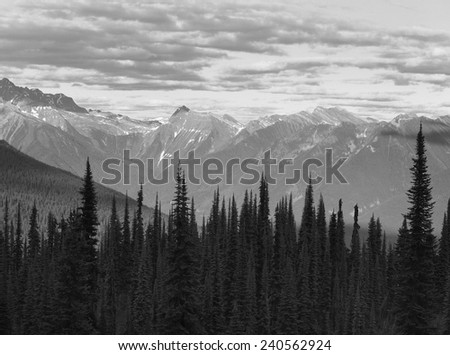 Landscape with forest in British Columbia. Mount Revelstoke. Canada. Horizontal - stock photo