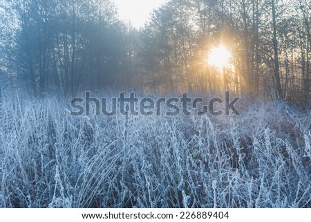 landscape with frosted plants and sunbeams - stock photo