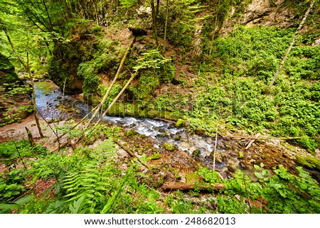 Landscape with Galbena river flowing through a canyon in Apuseni mountains, Romania