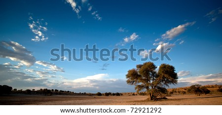 landscape with giraffes - stock photo