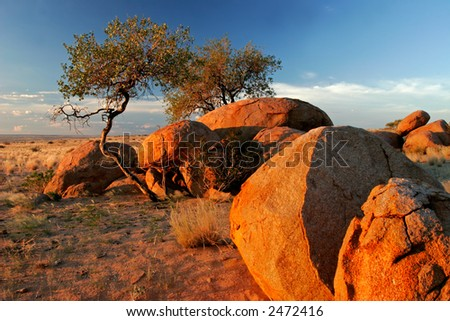 Landscape with granite boulders and trees at sunrise, Brandberg mountain, Namibia	 - stock photo