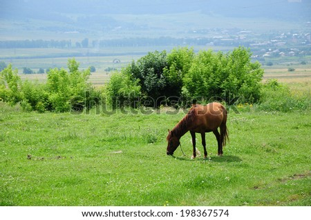 Landscape with grazing horse  - stock photo