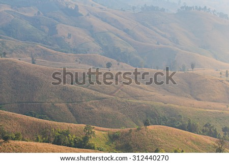 landscape with green corn field, forest, mountains on sunset