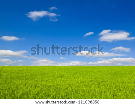 Landscape with green field and blue sky - stock photo