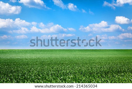 landscape with green grass field and blue sky - stock photo