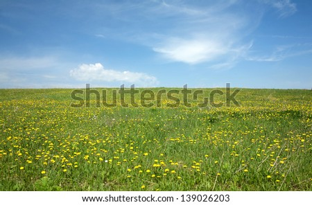 Landscape with green meadow with many yellow dandelions under beautiful sky with clouds in summer day