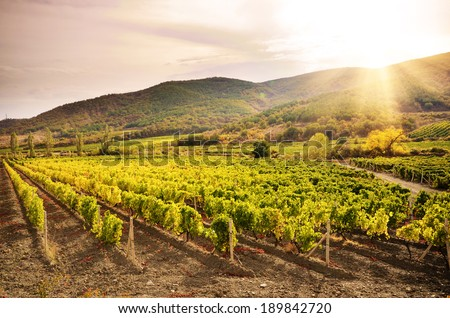 Landscape with green vineyards and Mountains at background - stock photo