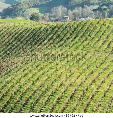 landscape with hilly vineyards in Tuscany, Italy - stock photo