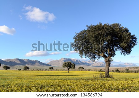 Landscape with holm oaks at National Park of Sierra Maria- los Velez in spring - stock photo