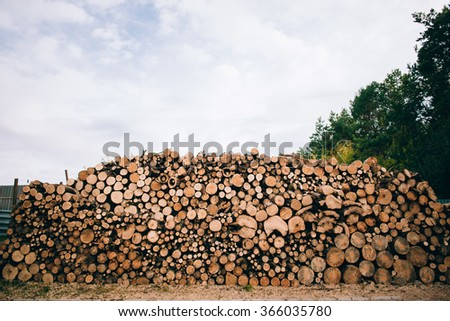 Landscape With Large Woodpile In The Summer Forest From Sawn Old Big Pine And Spruce De-barked Logs For Forestry Industry - stock photo