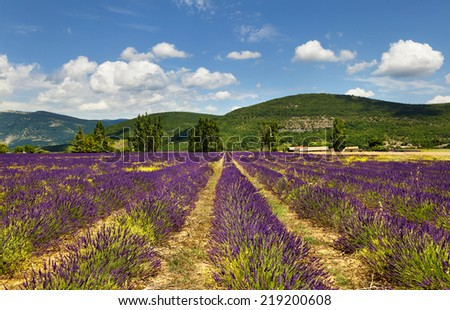 Landscape with lavender field and farmhouse. Provence, France. - stock photo