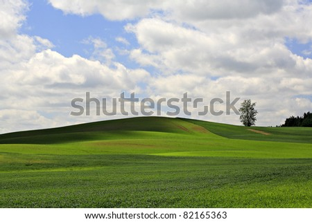 Landscape with lonely tree, grass and sky.
