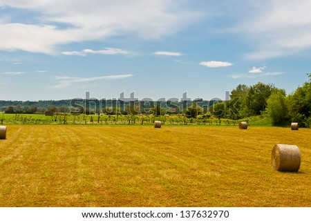 Landscape with Many Hay Bales and Vineyard - stock photo