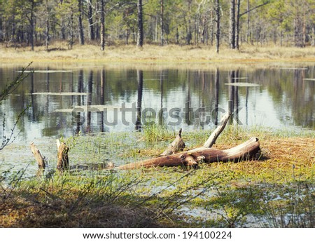 Landscape with marsh - stock photo