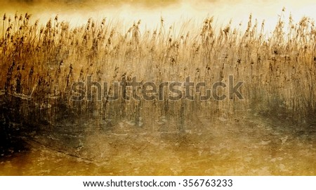 Landscape with morning fog over Reed grass
