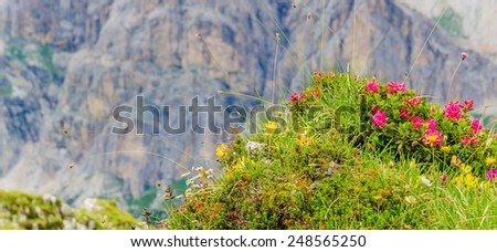 Landscape with mountain flowers, Averau-Nuvolau group, Dolomites Mountains, Italy - stock photo