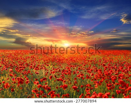 landscape with nice sunset over poppy field