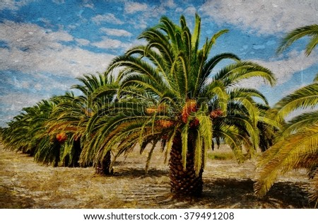 Landscape with Palm Trees and white clouds in the sky