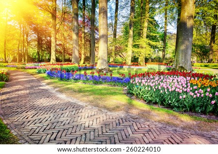 Landscape with park alley at sunny spring day  - stock photo