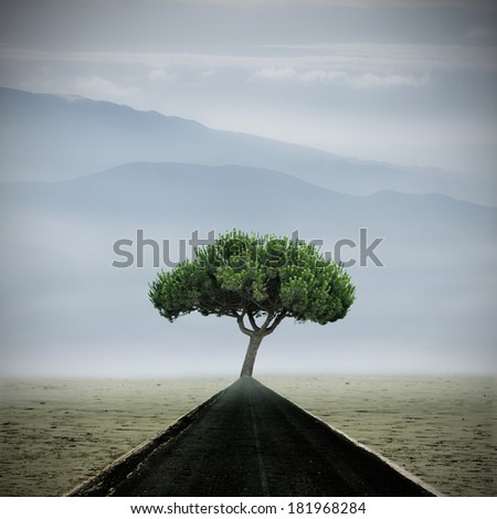 landscape with paved road toward the tree - stock photo