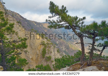 Landscape with pine on a steep slope in the mountains, and clouds sky.