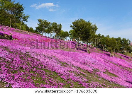 landscape with pink flowers on the mountain shitose Hokkaido Japan. - stock photo
