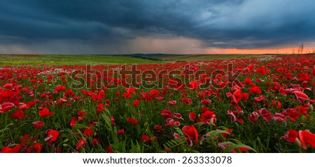 landscape with poppies during a thunderstorm - stock photo