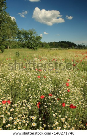 Landscape with poppy field and blue sky - stock photo