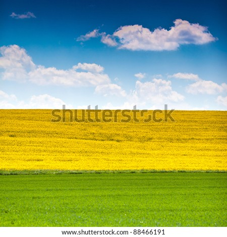 Landscape with rapeseed flowers, grass and sky - stock photo