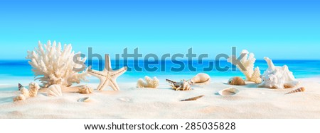 Landscape with seashells on tropical beach - summer holiday background  - stock photo