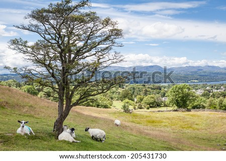 Landscape with sheep, Lake Windermere and mountains in the Lake District, UK - stock photo