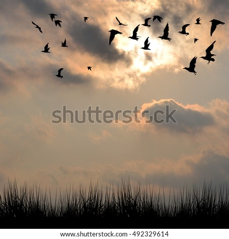Landscape with silhouettes of grass and birds against cloudy sky
