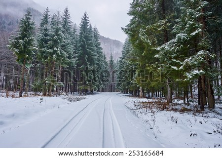 Landscape with snowy road in the winter through a pine forest - stock photo
