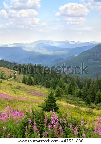Landscape with spruce, mountains and glade with blooming fireweed Epilobium angustifolium, Chamerion angustifolium, willowherb. Carpathian mountains. Ukraine - stock photo
