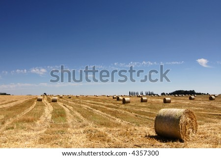 Landscape with straw bales