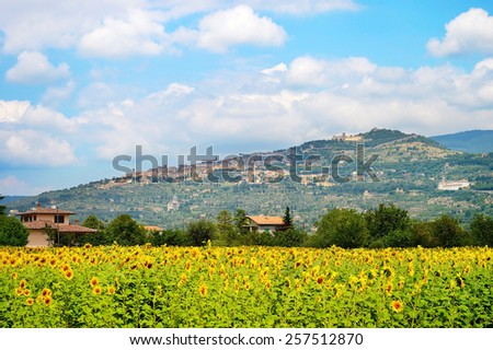 Landscape with sunflower field and town on the top of the hill. Cortona, Tuscany, Italy - stock photo